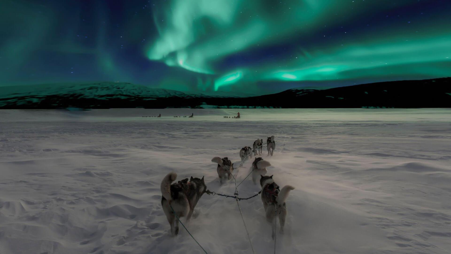 Utendørs_Svalbard_hundekjøring.jpg#asset:692